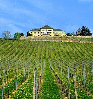 Schloss Johannisberg vine
