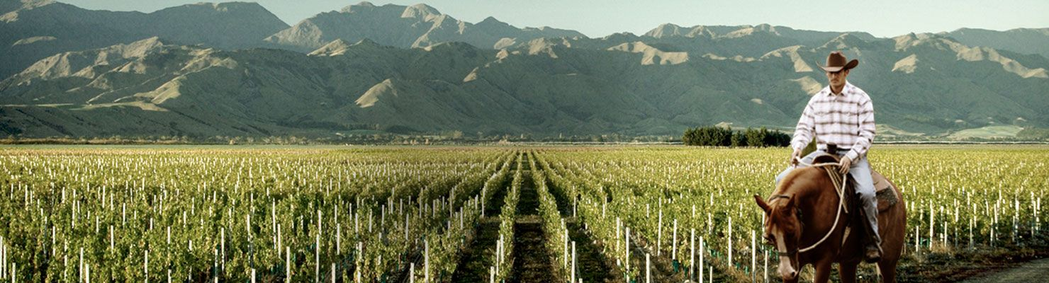 A South American Vineyard with mountains in the background