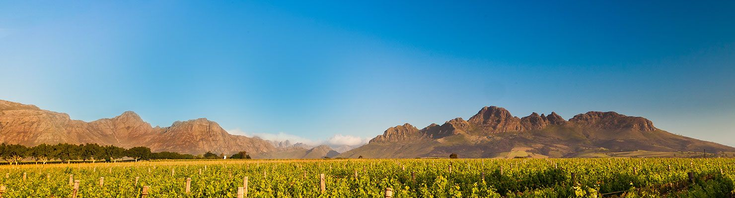 A South african landscape with mountains shrouded in cloud behind a green luscious vineyard