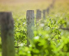 A field fence in Burguny