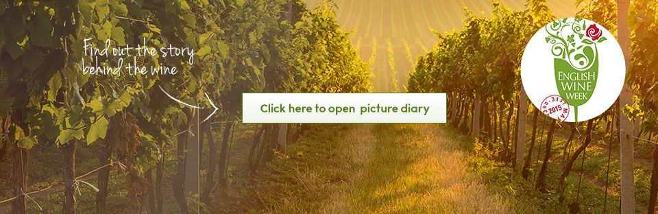 English wine picture diary