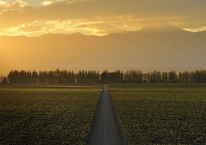 An argentinian vineyard
