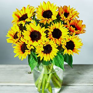 A Vase of British sunflowers