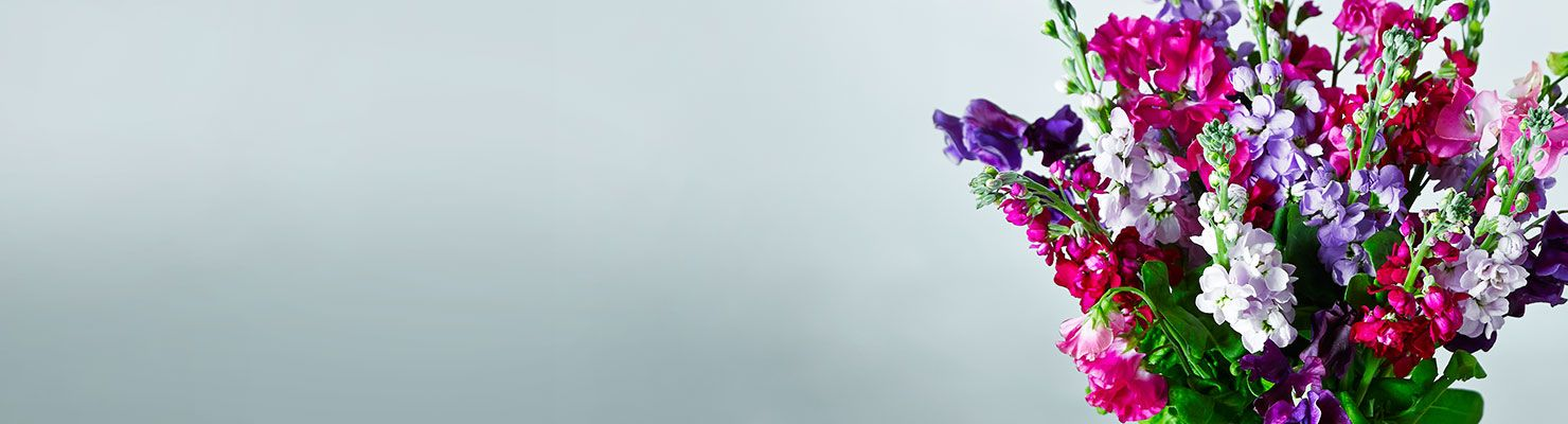 Spring flowers & plants with FREE delivery at Waitrose Florist