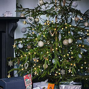 Christmas trees from Waitrose Florist