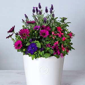 A flowered pot plant