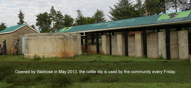 Community cattle dip in Kenya