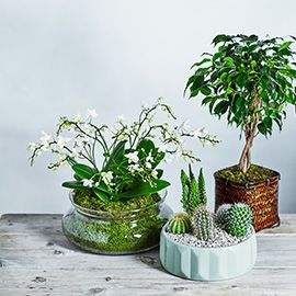 Waitrose Florist Interior Decor Plants