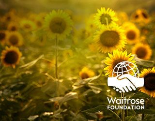 Sun Flowers and Waitrose Foundation