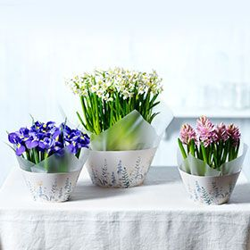 Shop Spring flowers and plants at Waitrose Florist