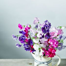 Waitrose sweet peas