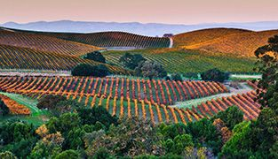 Red Californian vineyards