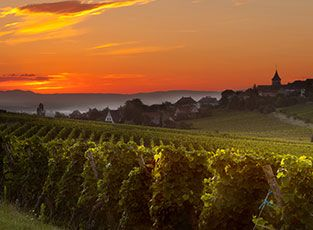 A Vineyard in Burgundy