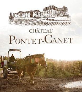The vineyards of Chateau Pontet-Canet