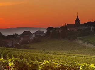 Brilliance of Burgundy