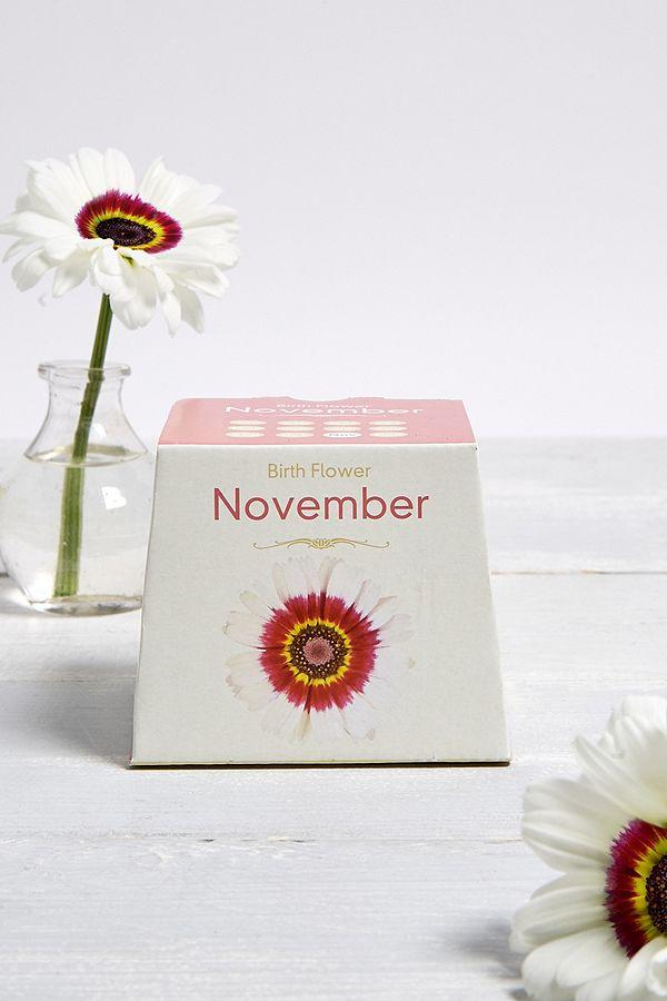 Slide View: 1: Grow a Chrysanthemum November Birth Flower Kit