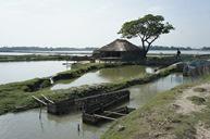 Fischfarm in Indien