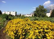 Urbaner Garten mit blühenden Blumen