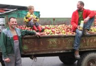 Apfelbauer mit Anhänger voller Äpfel