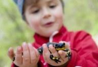 Kind mit Feuersalamander in der Hand