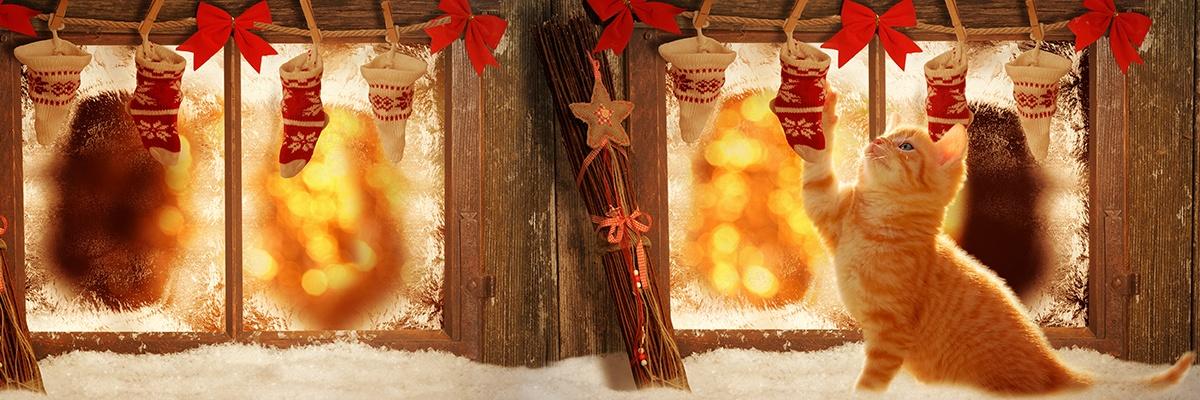 Ein rot getigertes Kätzchen spielt mit einer kleinen Weihnachtssocke vor einem alten Fenster, die aufgehängt ist. Es hängen noch sieben weitere Söckchen aufgereiht.