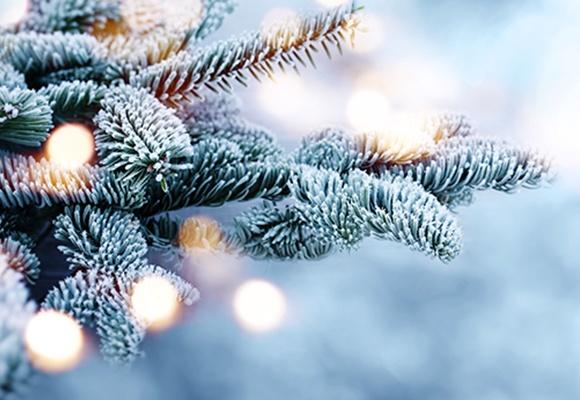 Links und rechts sind Tannenzweige, die mit Frost bedeckt sind. Der Hintergrund is flimmernd weiß.