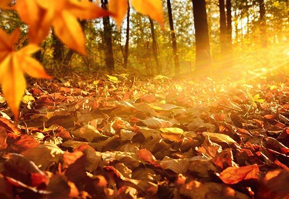 Ein Kastanienblatt verdeckt die linke Seite. Im Hintergrund ist ein herbstlich anmutender Wald in orangem Licht.