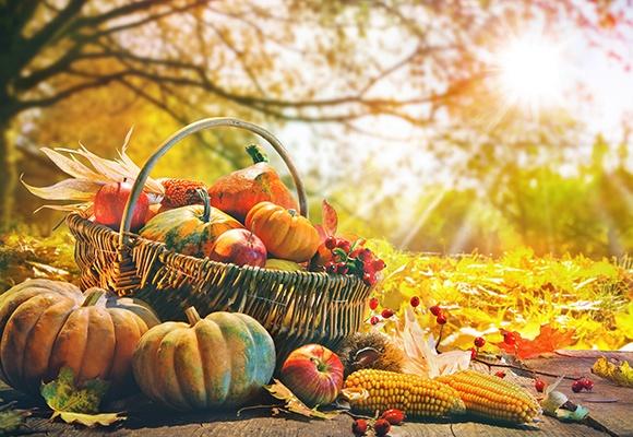 In gelben Blättern, die auf dem Boden im Wald liegen, steht ein geflochtenes Körbchen gefüllt mit Kürbissen, Äpfeln und Mais.