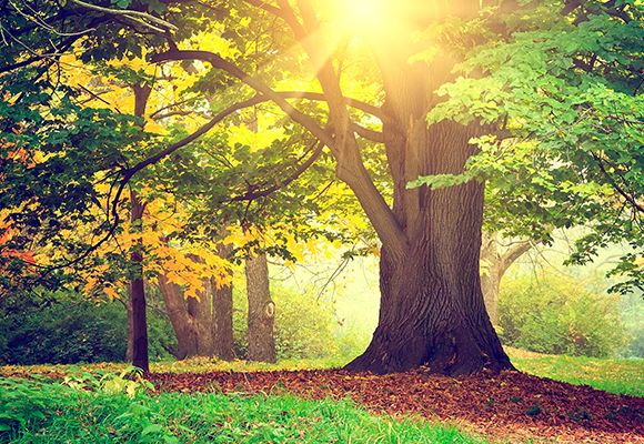 Ein Baum mit grünen Blättern steht vor weiteren Bäumen, die bereits gelbe und orange Blätter bekommen.