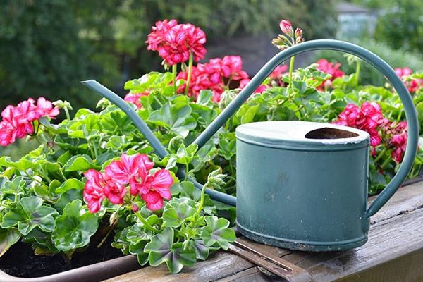 Eine alte Gießkanne aus Metall steht neben einer rosa Balkonpflanze auf dem Geländer.