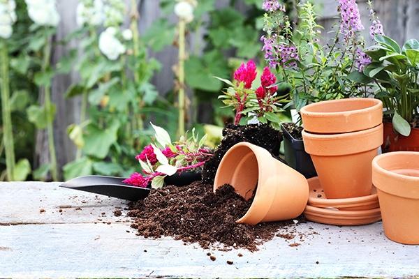 Rechts stehen leere Pflanzentöpfe, einer ist umgefallen und Erde fällt heraus. Dahinter sind die dazugehörigen Blumen, die nach dem Herausnehmen noch in der Erde eingewurzelt sind.