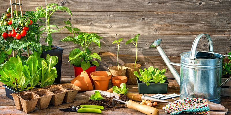 Auf Holz stehen Pflanzentöpfe, eine silberne Gießkanne, sowie verschiedene Topfkräuter.