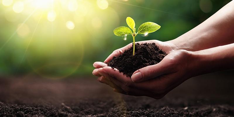 Zwei Hände formen eine Kuhle in der Erde liegt. Aus dieser Erde wächst ein Keimling. Der Hintergrund ist grün.