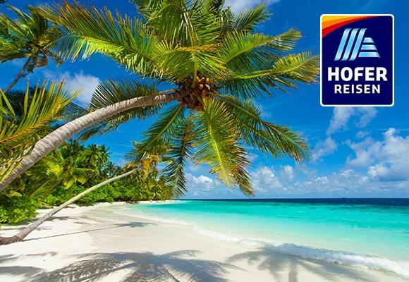 Ein weißer Sandstrand mit Palmen. In der rechten oberen Ecke ist das HOFER REISEN Logo.