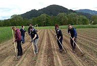 HOFER Mitarbeiter auf dem Bio-Gemüse-Feld