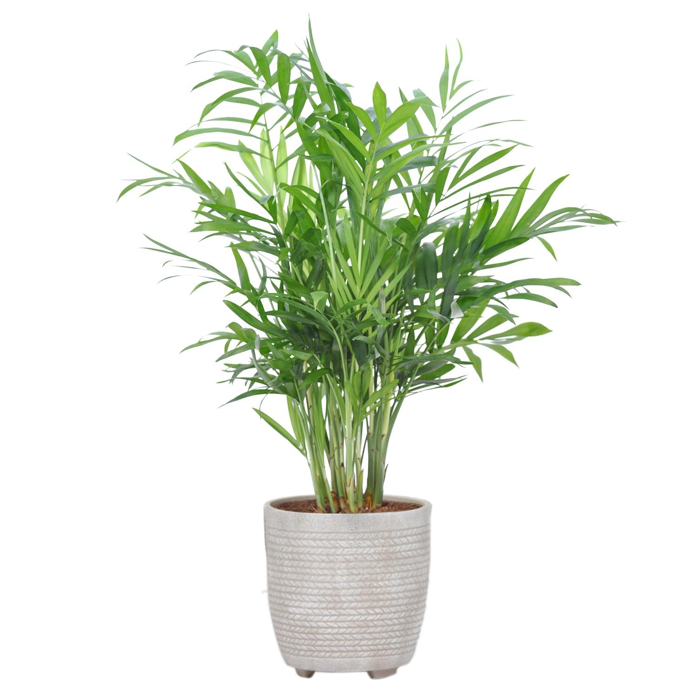 Pflanzenmix in Trendkeramik*