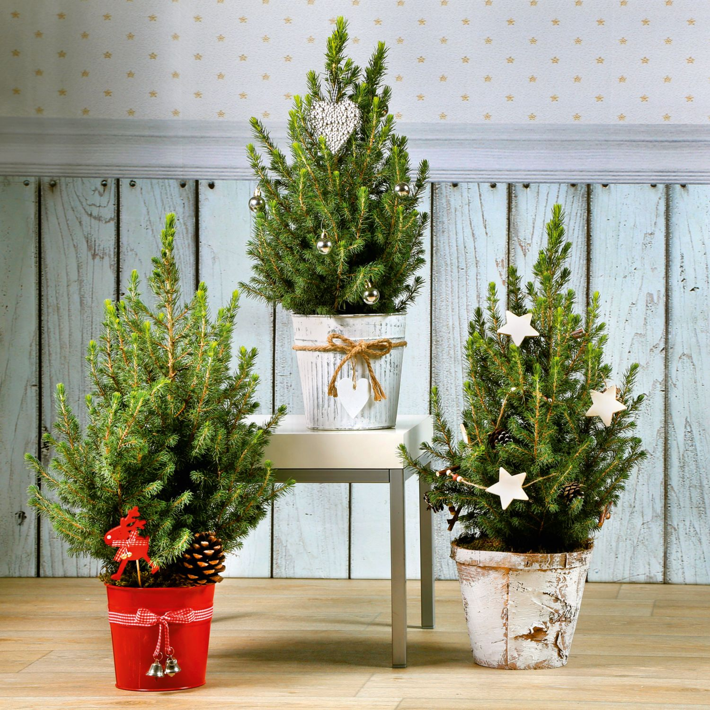 Weihnachtsbäumchen dekoriert