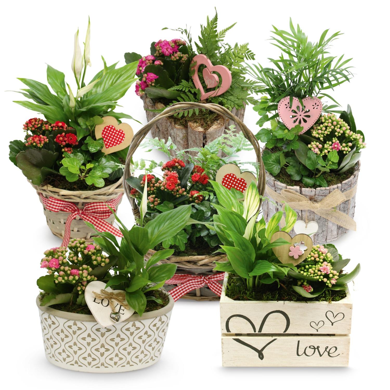 Bepflanztes Valentinsarrangement