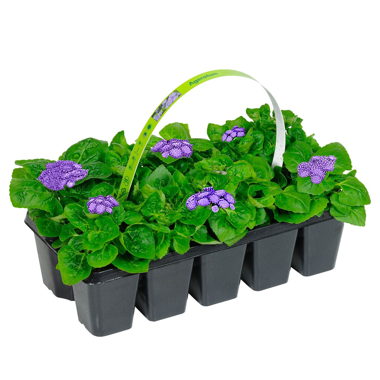 GARDENLINE® Beetpflanzen*