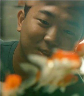 Primo piano di un ragazzo che guarda un pesce rosso che nuota in un acquario