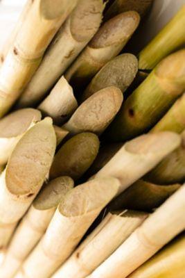La canne à sucre est utilisée pour produire des matières respectueuses de l'environnement.