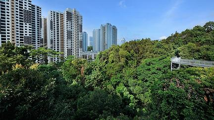 Rewilding: the cities bringing nature back
