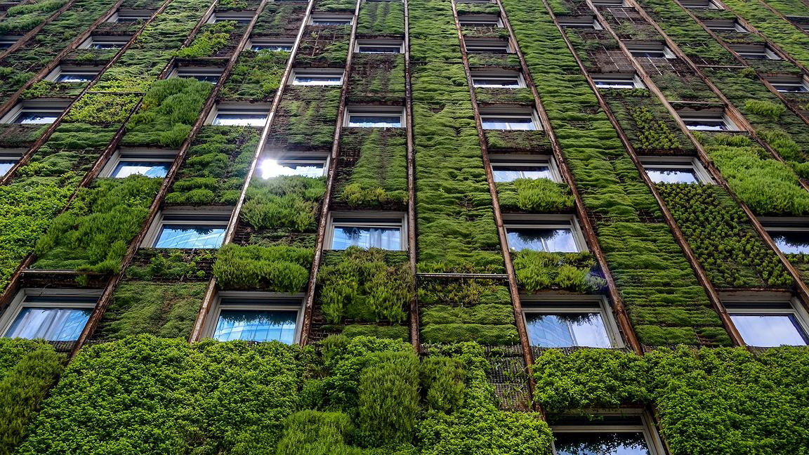 Facade of tall building with leaf-covered green wall