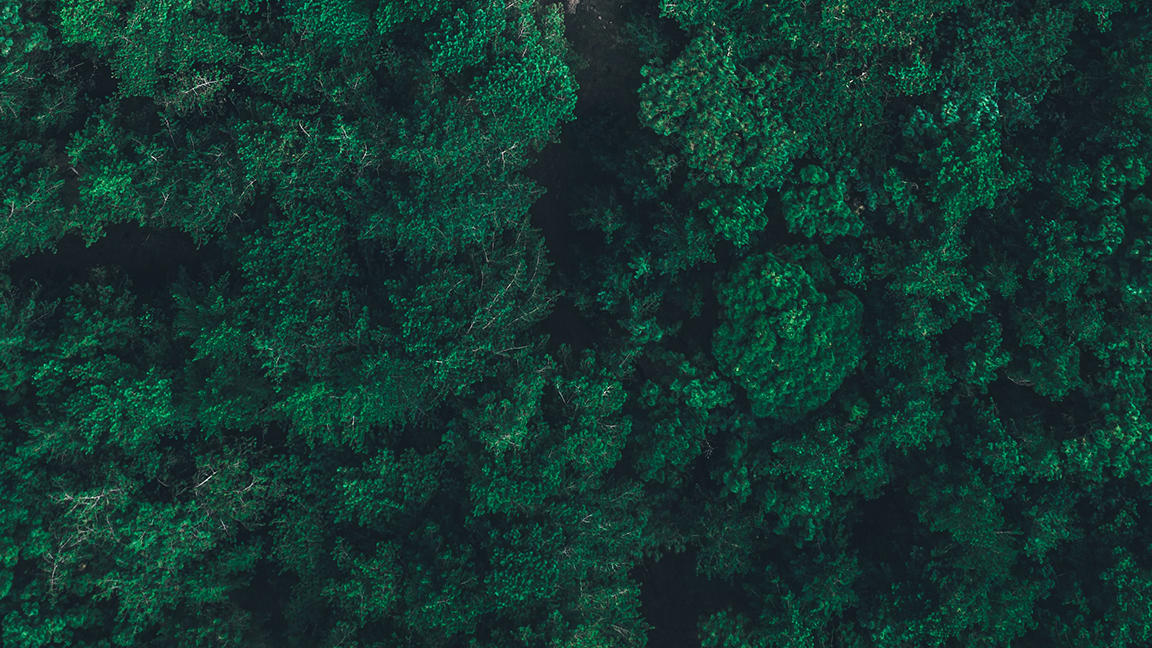 Forest of trees from above