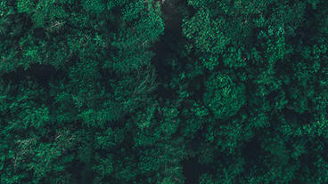 Better tree carbon data can support offsets