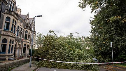 Part 1: How dutyholders can manage tree risk