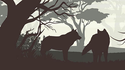 How wolves came back to Yellowstone Park