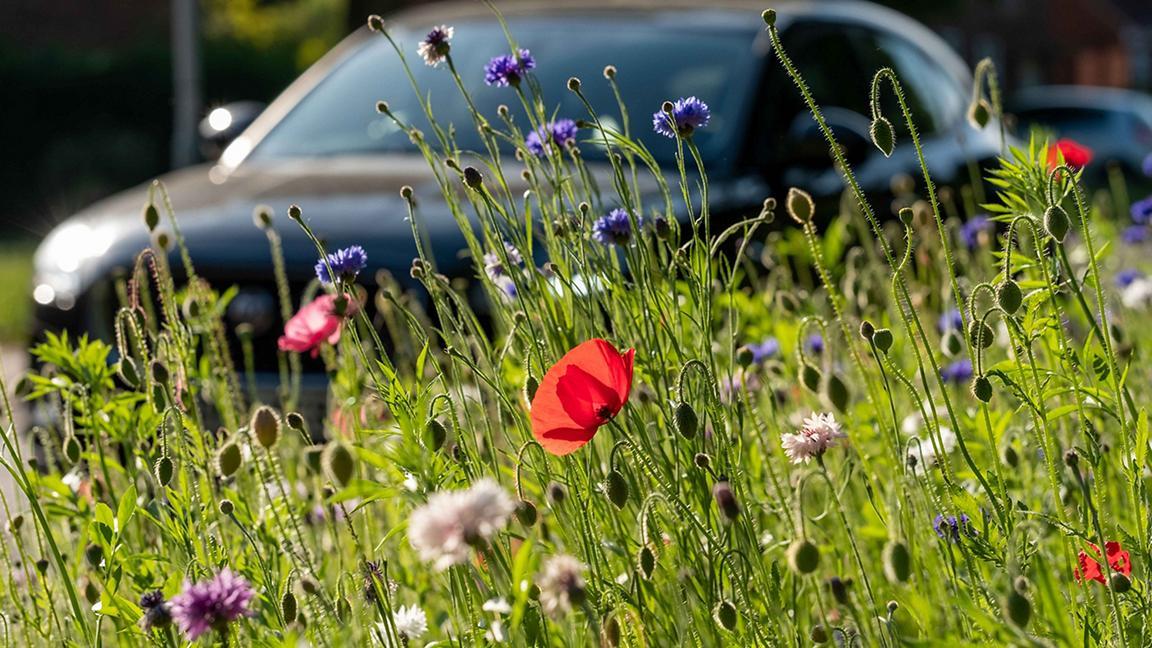 Wildflowers on verge of road