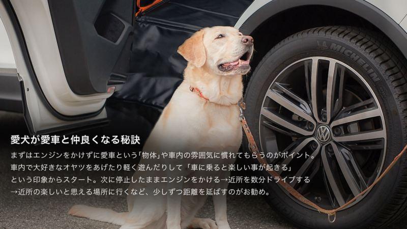 ペットと出かけよう。|出発前のポイント|愛犬が愛車と仲良くなる秘訣