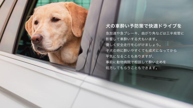 ペットと出かけよう。|出発前のポイント|犬の車酔い防止策で快適ドライブを